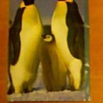 エンペラーペンギン親子