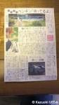 平川貴子さんが案内人となって、ペンギン展示施設を訪れる企画記事が朝日新聞の夕刊(2011年6月3日)に掲載