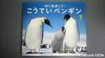 『はじめまして!こうていペンギン』(サンチャイルド・ビッグサイエンス1月号、チャイルド本社、平成24年1月1日発行)