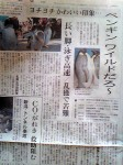 朝日新聞夕刊(5月26日)のペンギン記事=名古屋版